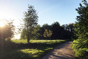 Walking Start Natur